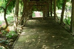 A lovely arbored walkway leading through the gardens to thehouse