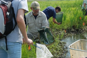 Loblolly Marsh Bioblitz '09