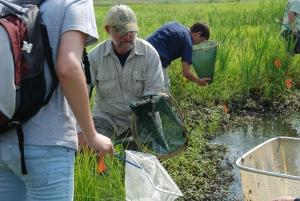 Loblolly Marsh Bioblitz '09