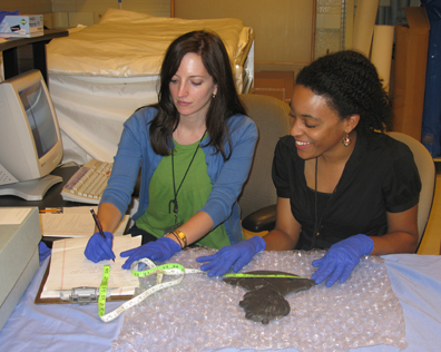 Meredith McGovern works with intern Heather Lightfoot on processing Lincoln artifacts.